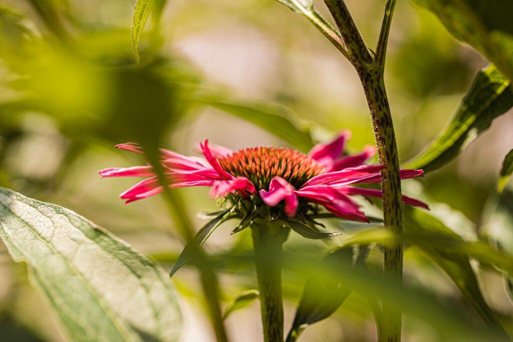 Tuinontwerp-Sjoerd-de-jong-hovenier-silvolde-doetinchem-sinderen-gaanderen-gendringen-varsselder-bloemen-platen-tuinen-onderhoud-tuinaanleg-83
