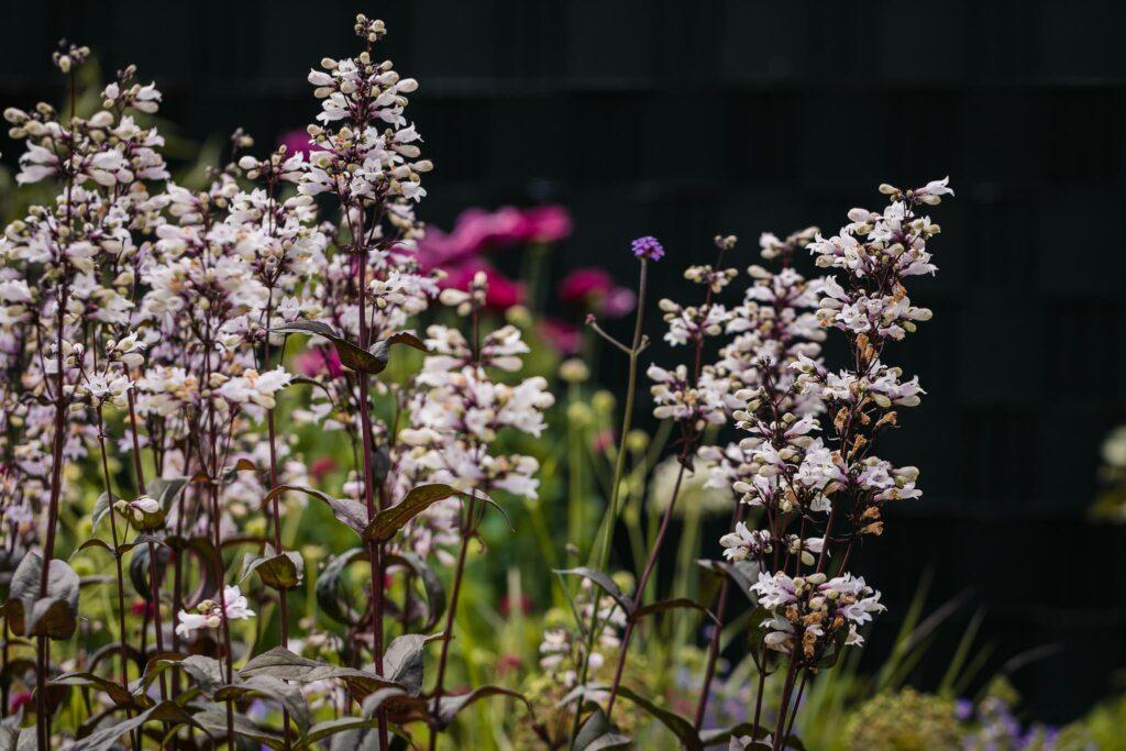 Tuinrenovatie-Sjoerd-de-jong-hovenier-silvolde-doetinchem-sinderen-tuin-onderhoud