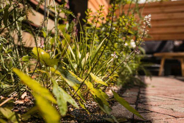 Stadtuintje Pergola cortenstaal prairie tuin doetinchem