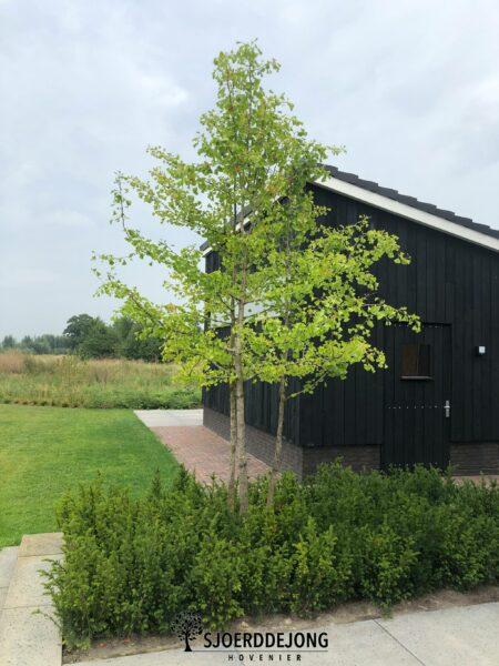 Strakke-bloementuin-Voorst-Schellevis-producten-Prairietuin-hoogte-verschillen-Sjoerd-de-Jong-Hovenier-Achterhoek